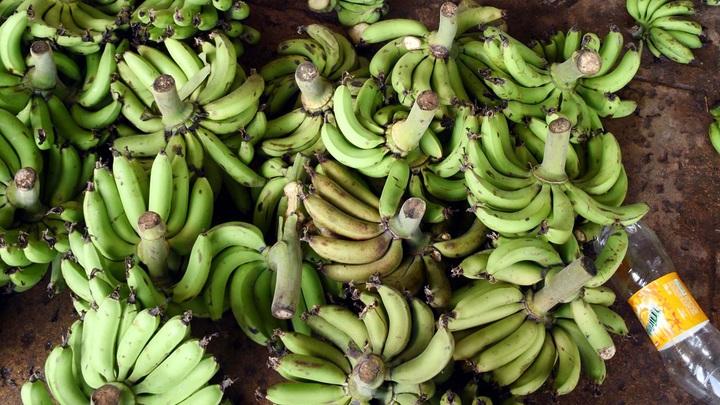 Чрезвычайная ситуация в Колумбии: Эпидемия грибка грозит оставить мир без бананов - СМИ