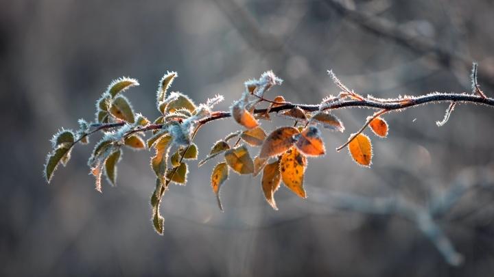 Снег и мокрый снег ждут в Кузбассе на следующей неделе