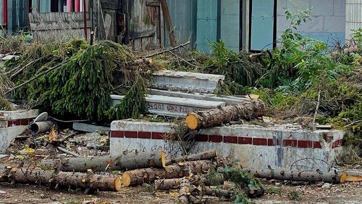 Город скоро лысым станет: в Самаре около театра СамАрт вырубили ели