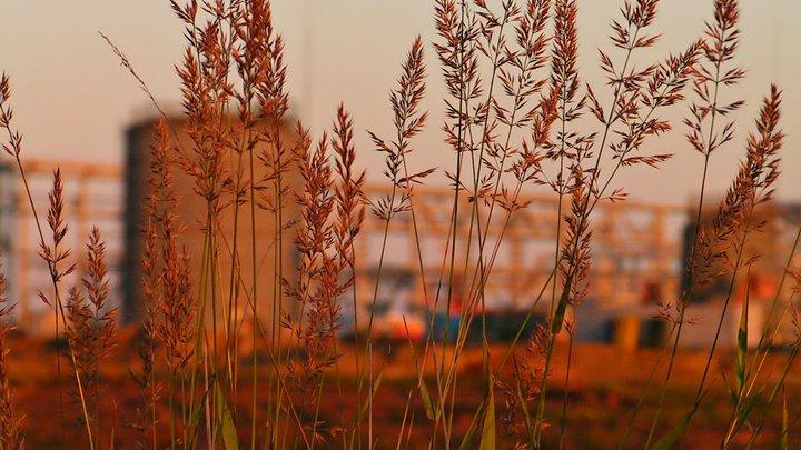 Из-за засухи вАстраханской области введен режимЧС