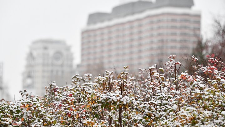 Снежок укроет землю и станет веселей: Стало известно, когда в Москве начнутся снегопады