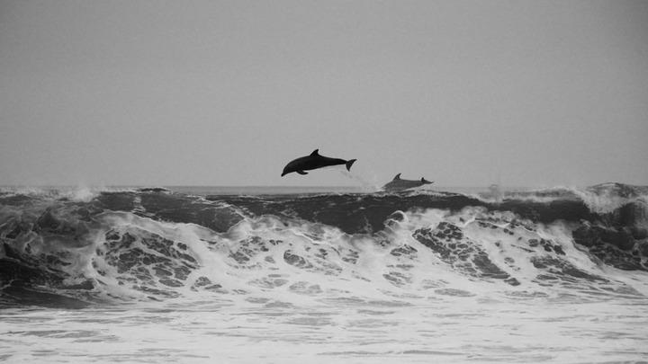 В Австралии 150 дельфинов выбросились на берег, выжили 15 особей - видео