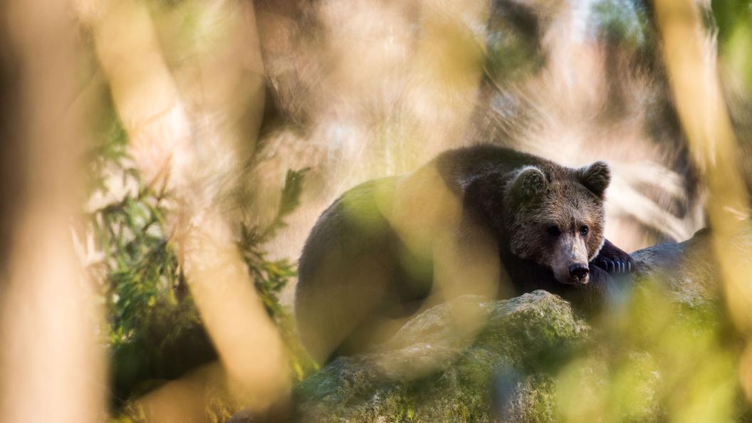 Встоличном зоопарке пробудились медведи