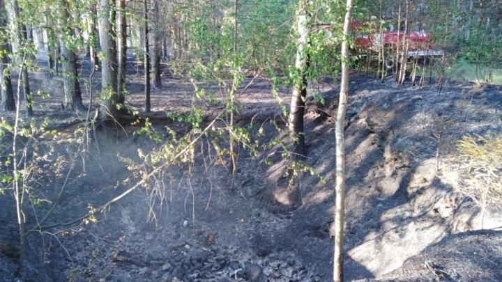 В Кинешемском районе вторые сутки тушат лесной пожар