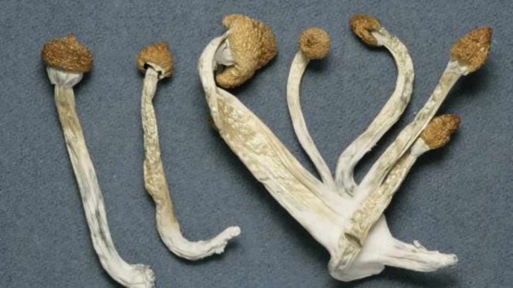 ВКалифорнии посоветовали узаконить галлюциногенные грибы