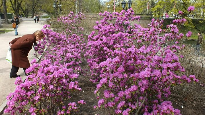 В Санкт-Петербурге появятся сады непрерывного цветения