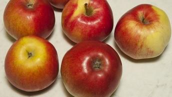 Яблоки с привкусом Польши: Боснию и Герцеговину обвинили в провозе санкционных продуктов
