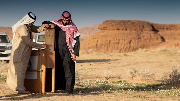 Десять миллиардов зелёных: Саудовский принц объявил войну пустыне