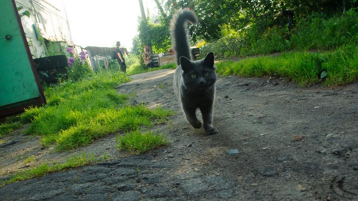 Хостес по имени Барсик: В пермском магазине появился сотрудник-кот