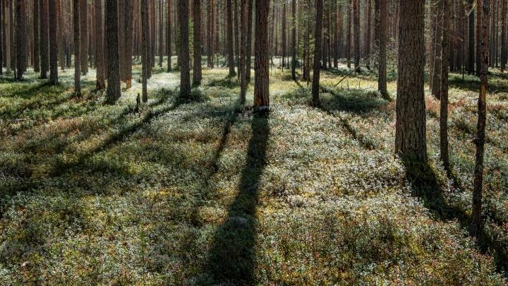 В лесах Кузбасса за три дня потерялись 70 человек