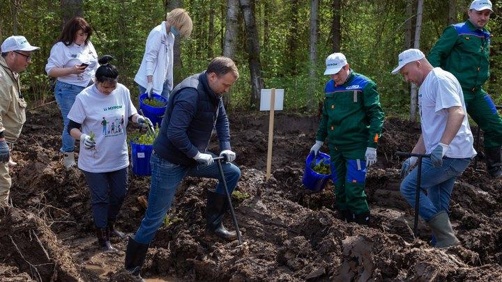 Владимирский вице-губернатор занялся посадками