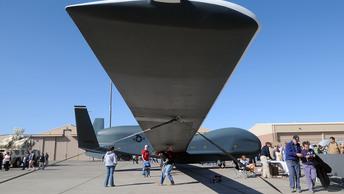 Американские беспилотники оснастят сенсорами летучих мышей