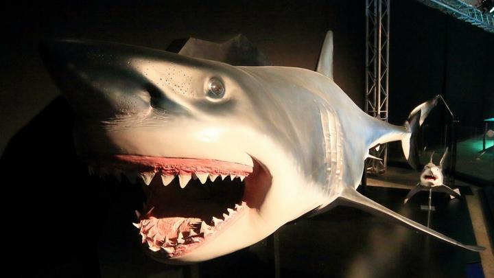 Интимные разборки: Акула-громила пала жертвой более мощного врага