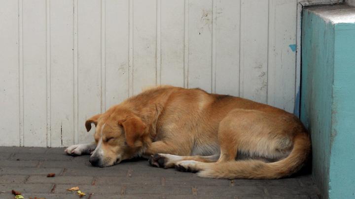 В Кинешме по решению суда устраняют нарушения в приюте для бездомных животных