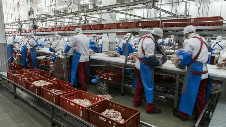 Россия готова поставлять в Турцию молоко, мясо и рыбу