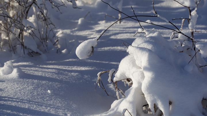До -20 и холоднее: Зимняя погода ждёт новосибирцев в середине недели