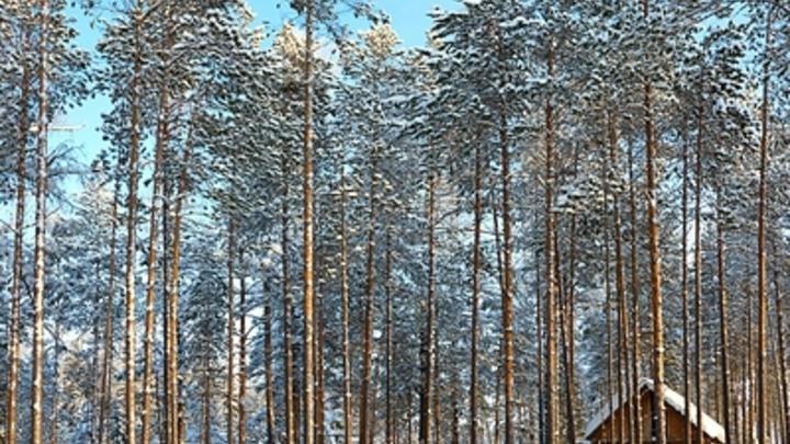 Ждите аномалий: Глава Росгидромета спрогнозировал погоду на ноябрь и декабрь