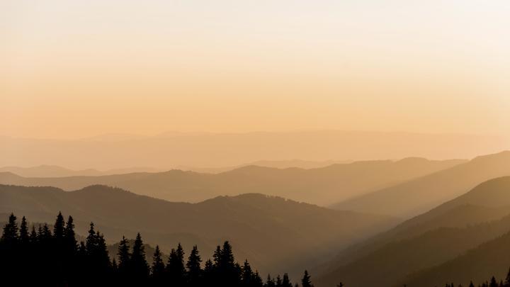 Евросоюз потребовал от Украины необработанного леса