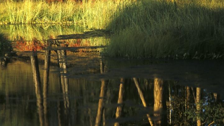 Нырнул и не выплыл: 15-летний подросток утонул в котловане около Черепаново