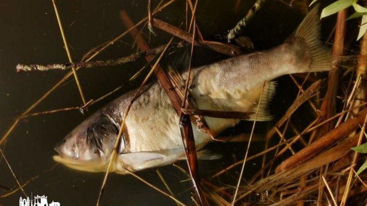 Белорусские экологи изучают причину мора рыбы в озере Квасовском