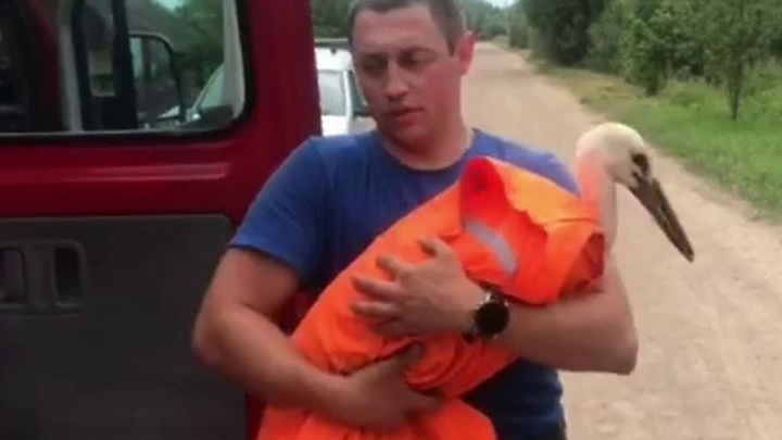 Белорусские спасатели спасли аиста, застрявшего на вышке связи в Витебске