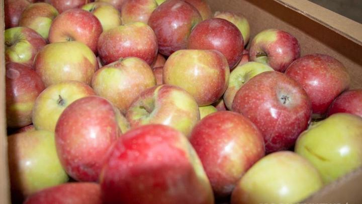 Россияне еще не скоро попробуют белорусских яблок