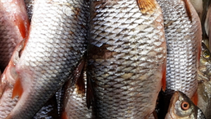 Житель Сретенска незаконно выловил рыбу в период нереста на 50 тысяч рублей
