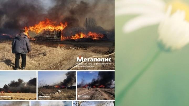И вновь пожар! Десять участков в поселке Аннино сгорели из-за сухой травы