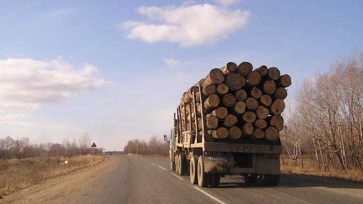 В Логойском районе в опрокинувшемся лесовозе погиб водитель