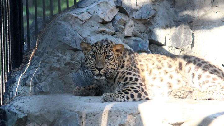 Новосибирский зоопарк увеличил стоимость билетов и абонементов с 1 июля