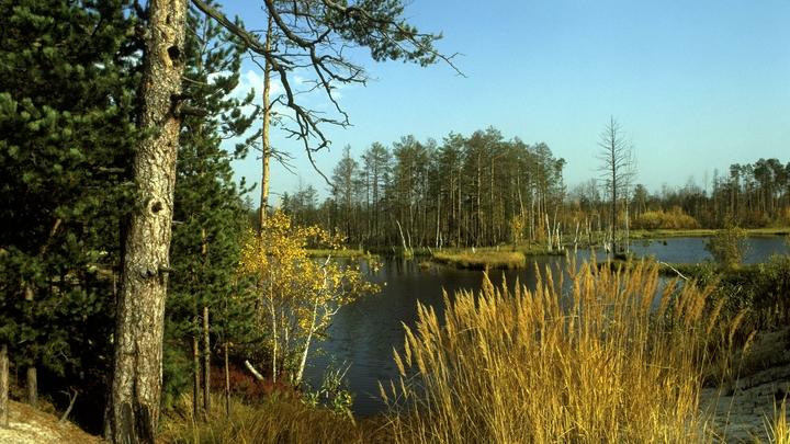 Отукуса клещей в Свердловской области с марта пострадали болеесеми тысяч человек