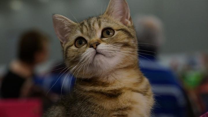 А народ у нас - лучший: Красноярская девушка рискнула жизнью ради котенка и восхитила Twitter