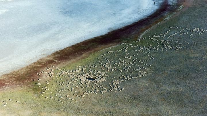 В Калмыкии весь берег Аршань-Зельмень усыпан мёртвой рыбой: Запах нереальный, просто ужасный