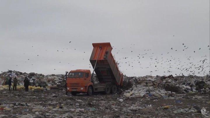 Подмосковье станет чище: Чиновник о рекультивации четырех мусорных полигонов в регионе
