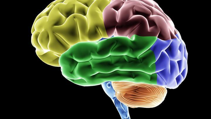 Американские ученые создали «интернет» из мозгов троих людей