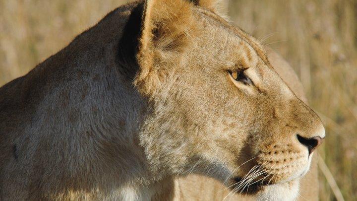Попытка манипуляции и терроризм: Что на самом деле происходит в парке львов Тайган
