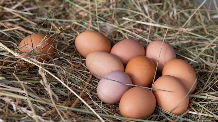 Первое число в маркировке - индекс счастья: Эксперты рассказали, как выбрать полезные яйца
