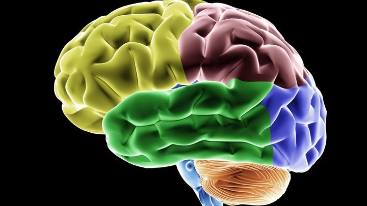 Американские учёные предложили блокировать часть мозга ради похудания