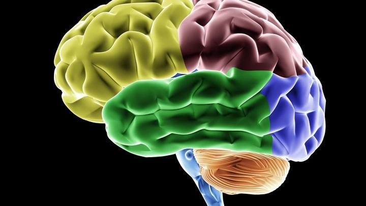В мозге есть секундная стрелка: Учёные раскрыли секрет тонкой настройки внутренних часов