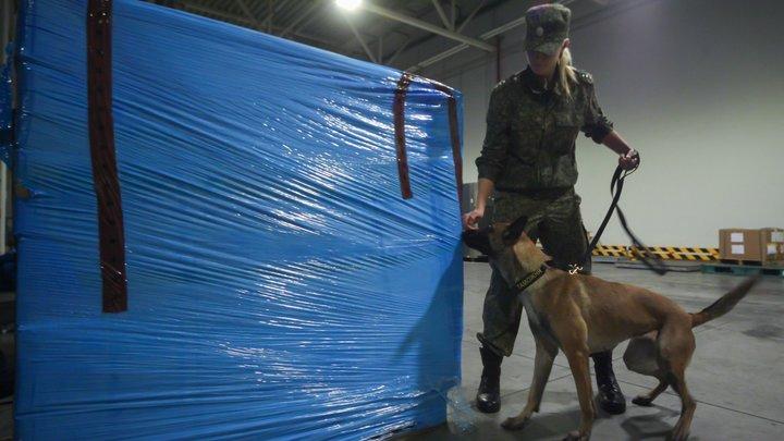 Подмосковные таможенники не позволили вывезти почти 4,5 тонны прекурсоров и наркотических средств