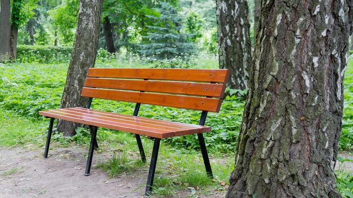 На Кубани подготовят варианты создания лесопарковых поясов во всех районах