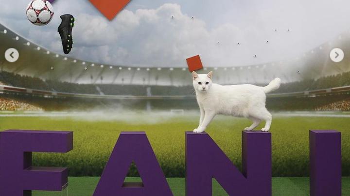 Кот-оракул Ахилл предсказал победителя в матче Сборных России и Финляндии на Евро-2020