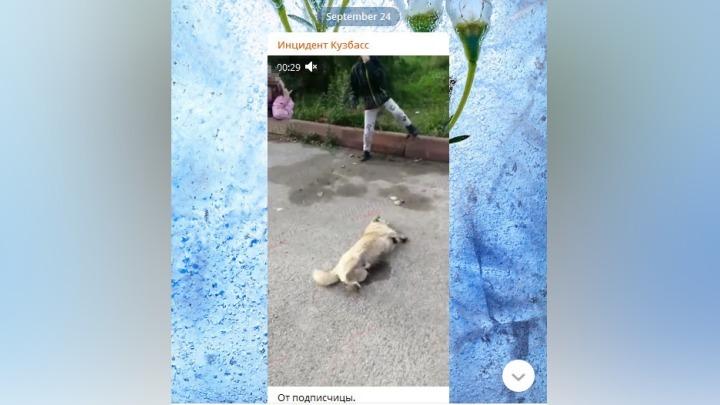 Дети стали очевидцами убийства собак в Кузбассе