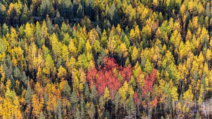 В Сочи спасатели два часа искали мужчину, который заблудился в лесу