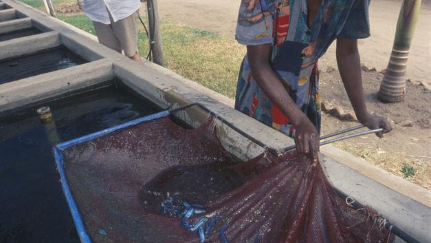 Не ходите в Африку гулять: Роспотребнадзор предупредил о лихорадке в Южном Судане