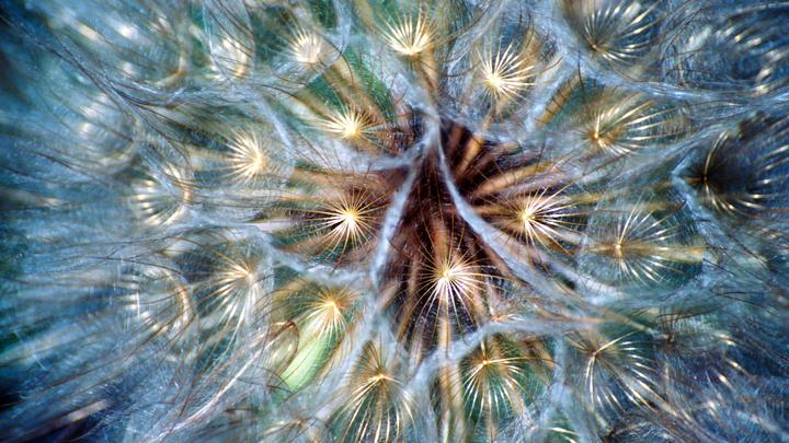 В США разработали микрочипы-семена для наблюдений за природой и людьми