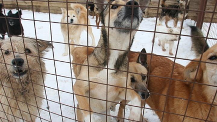 Прокуратура заставила главу Кыринского района отлавливать бродячих собак