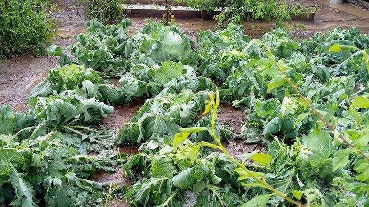 В селе Новокургатай Акшинского района град погубил урожай местных жителей