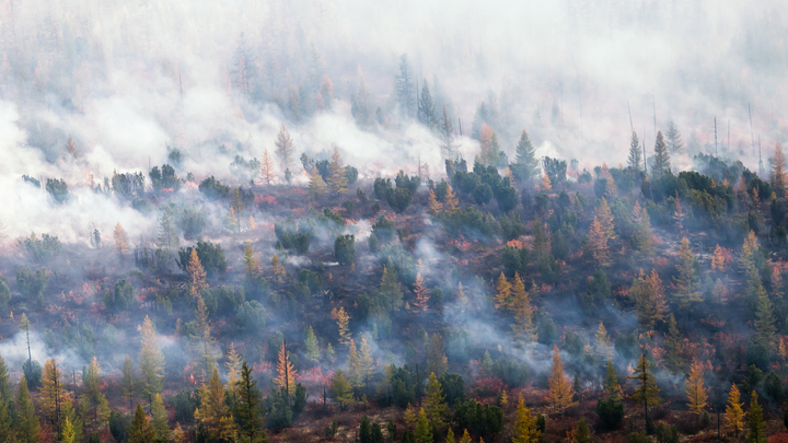Тушить «невыгодно». Полстраны задыхается в дыму при бездействии чиновников