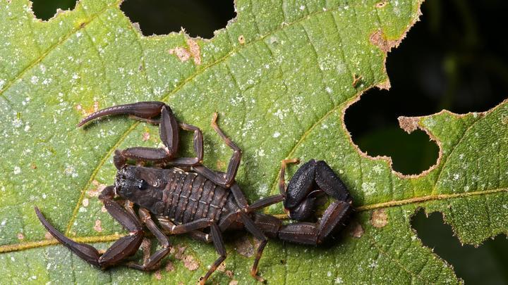 Из яда скорпиона собрались делать лекарства: Русские учёные нащупали способ лечения рака